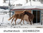 beautiful horses playing in the ... | Shutterstock . vector #1024883254