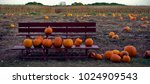 pumpkins on bench in front of...   Shutterstock . vector #1024909543