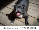 happy dog   laughing dog  ...   Shutterstock . vector #1024927333