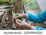 food north thailand | Shutterstock . vector #1024944526