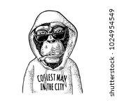 monkey hipster dressed in the... | Shutterstock .eps vector #1024954549