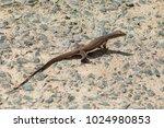 large lizard on the rocks | Shutterstock . vector #1024980853