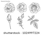 rose vector set by hand drawing | Shutterstock .eps vector #1024997224