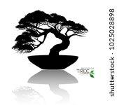 japanese bonsai tree   plant...