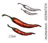 chili pepper seasoning spice... | Shutterstock .eps vector #1025067274
