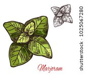 marjoram seasoning spice herb... | Shutterstock .eps vector #1025067280