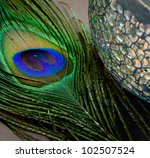 Close Up Of Peacock Feather An...