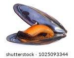 isolated fresh mussel on white...   Shutterstock . vector #1025093344