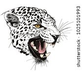 roaring leopard head hand drawn ... | Shutterstock .eps vector #1025101993