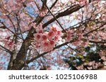 pink flora blossom close up at... | Shutterstock . vector #1025106988