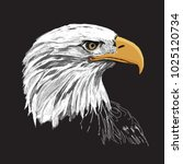 bald eagle hand drawn vector... | Shutterstock .eps vector #1025120734