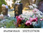Colorful Flowers In Front Of A...