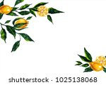 hand drawn watercolor lemon... | Shutterstock . vector #1025138068