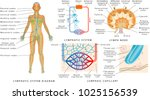 lymphatic system   lymphatic... | Shutterstock .eps vector #1025156539