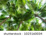 coconut palm trees bottom view  ... | Shutterstock . vector #1025160034
