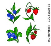 set of berries vector...   Shutterstock .eps vector #1025160598