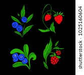 set of berries vector...   Shutterstock .eps vector #1025160604