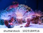beautiful live corals on the...   Shutterstock . vector #1025184916