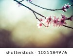 beautiful blooming peach trees... | Shutterstock . vector #1025184976