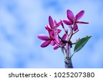 tropical flora flower | Shutterstock . vector #1025207380