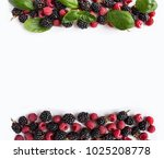 black and red berries isolated... | Shutterstock . vector #1025208778
