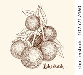 sketch of exotic tropical fruit ... | Shutterstock .eps vector #1025217460