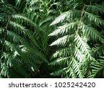 green leaf nature background.  | Shutterstock . vector #1025242420