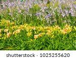 Summer Flower Bed With The...