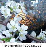 A Close Up Of Plum Blossoms An...