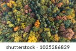autumn forest aerial drone view | Shutterstock . vector #1025286829