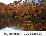 bolu  turkey   november 11 ... | Shutterstock . vector #1025326810