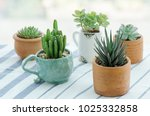 various types of mini cactus... | Shutterstock . vector #1025332858