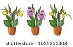 hand drawn set of orchids in... | Shutterstock .eps vector #1025351308