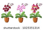 hand drawn set of orchids in... | Shutterstock .eps vector #1025351314
