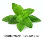 mint leaf close up on a white... | Shutterstock . vector #102535913