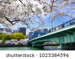 branches of cherry blossom with ... | Shutterstock . vector #1025384596