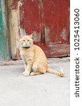 portrait of red cat | Shutterstock . vector #1025413060