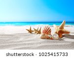 beautiful sea shells on the... | Shutterstock . vector #1025415733