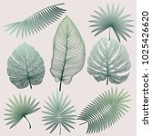 set tropical leaf isolated.... | Shutterstock .eps vector #1025426620