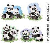 cute baby panda bear and its... | Shutterstock .eps vector #1025433178