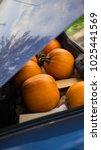 pumpkins in back of car trunk...   Shutterstock . vector #1025441569