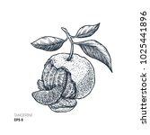 tangerine illustration.... | Shutterstock .eps vector #1025441896
