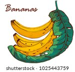bananas  hand drawing  banana... | Shutterstock .eps vector #1025443759
