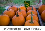 pumpkins for sale at farm... | Shutterstock . vector #1025444680