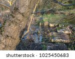Small photo of Russia Dock Woodlands River And Rocks To Get Across.