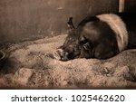 monochrome horizontal view of... | Shutterstock . vector #1025462620