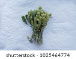 close up bunch of green sage on ... | Shutterstock . vector #1025464774