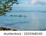 group of pelicans perched on...   Shutterstock . vector #1025468140