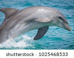 close up of dolphin diving to... | Shutterstock . vector #1025468533