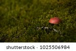 red brown mushroom close up... | Shutterstock . vector #1025506984